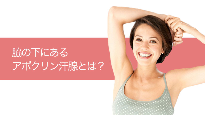脇の下にあるアポクリン汗腺とは?   ワキガ・脇汗対策ブログ