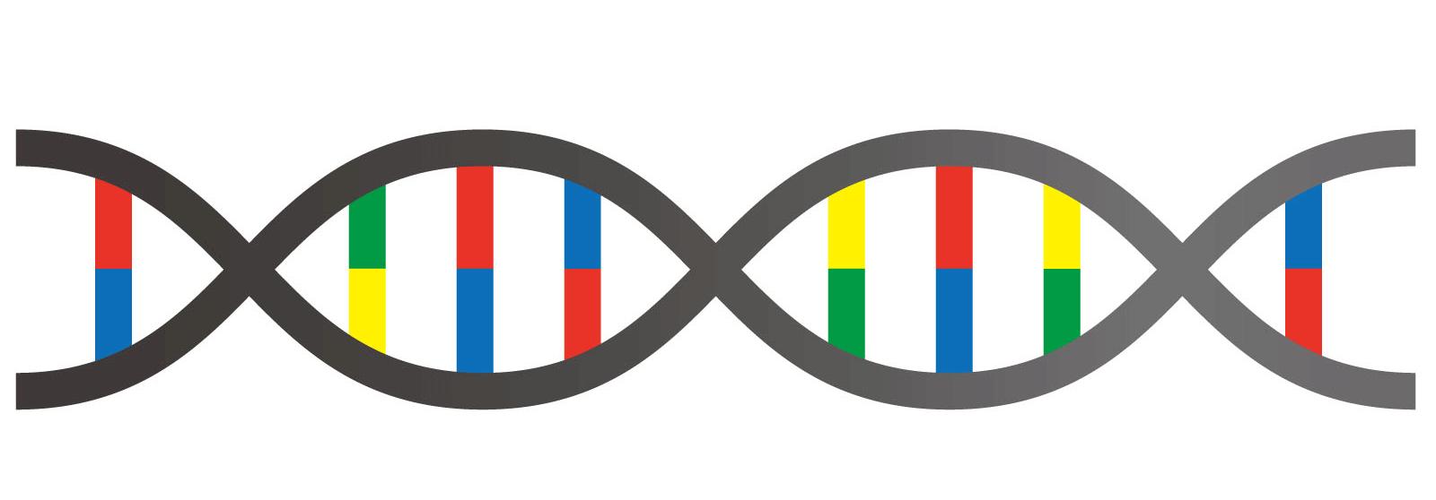 すそわきがが遺伝しやすい理由と確率について